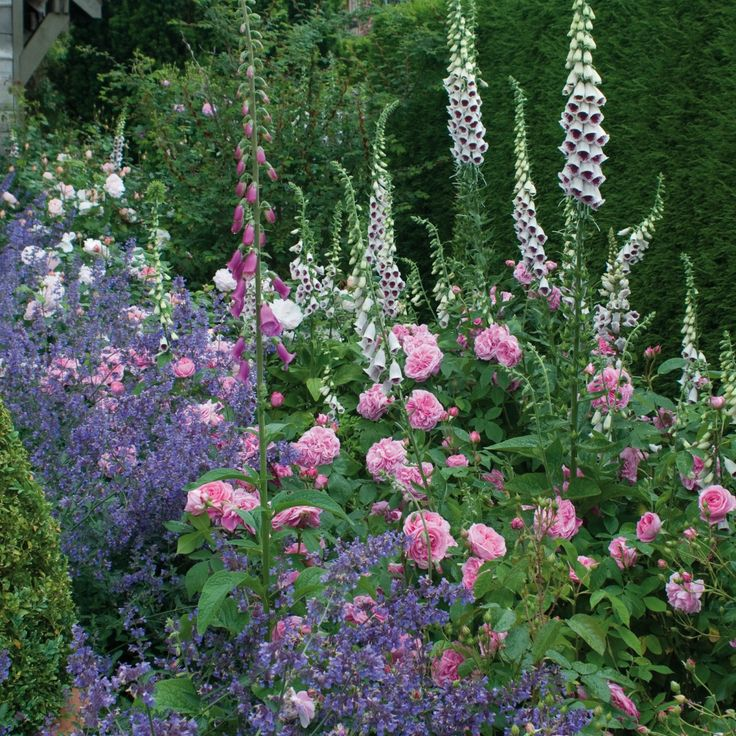 The 25 Best Ideas About Cottage Garden Design On Pinterest