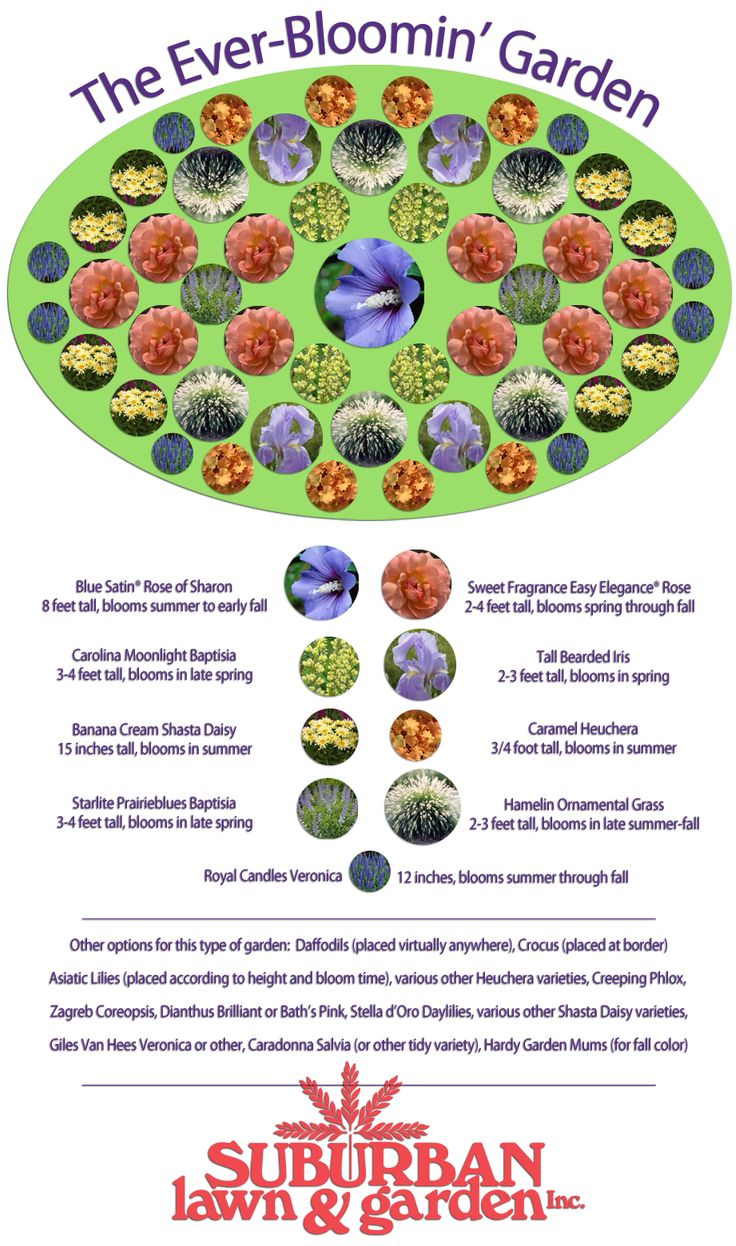25 Best Ideas About Perennial Gardens On Pinterest Summer