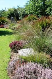 150 Best Images About Indigenous Karoo Garden Ideas On Pinterest