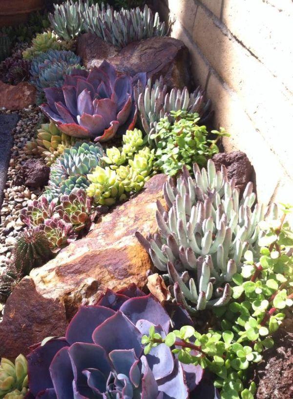 endless succulent