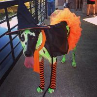 29 best images about Great Dane Costumes on Pinterest ...