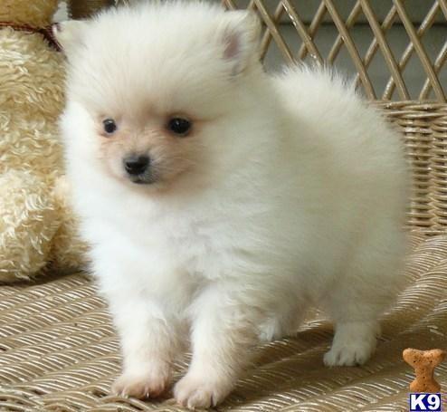 Small Dogs Kansas City Mo Dog Adoptions Kansas City Mo