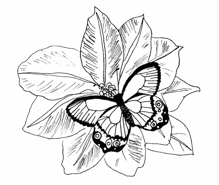 17 Best images about Coloring Pages {Butterflies} on