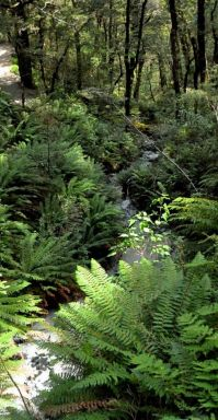 17 Best ideas about Tropical Forest on Pinterest | Trees ...