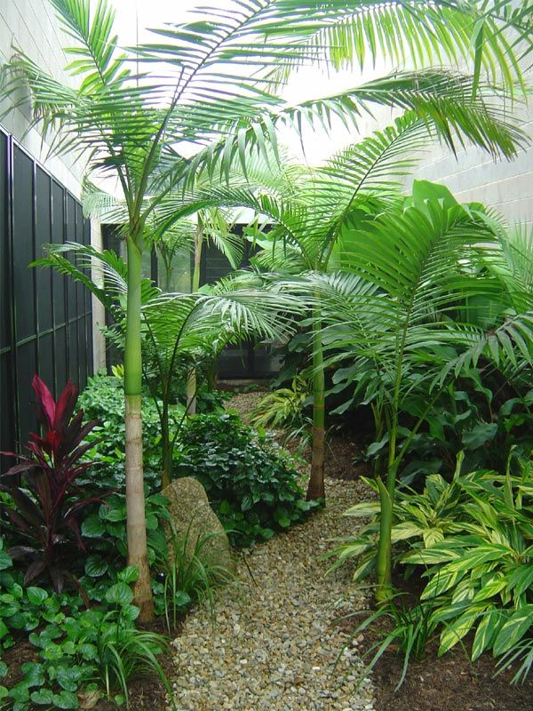 The 25 Best Ideas About Small Tropical Gardens On Pinterest