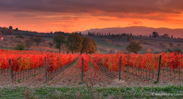 Free Fall Harvest Wallpaper Sunset At Vineyards Of Montefalco In Umbria Region Italy