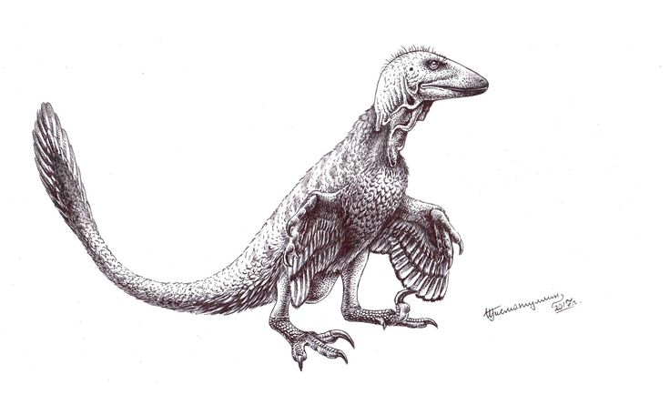 1000+ images about S3. Mesozoic fossils & paleoart : The