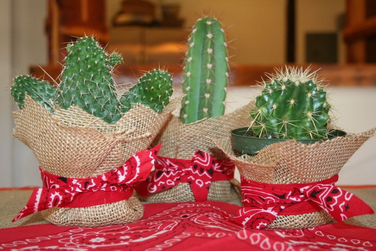 Cowgirl  Cowboy Party cacti centerpiece  Get Out Of Dodgewild west party  Pinterest  Cactus centerpiece Cowboy party and Cacti