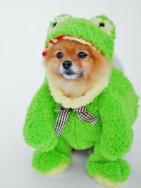 25+ Best Ideas about Dog Halloween Costumes on Pinterest ...
