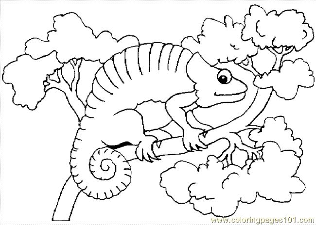 Eric Carle Chameleon Crafts Template Sketch Coloring Page
