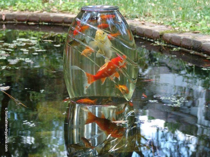 25 Best Pond Ideas On Pinterest Ponds Garden Pond And Backyard