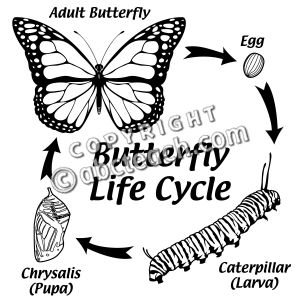 73 best images about Butterfly unit SCIENCE on Pinterest