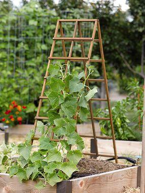 75 Best Images About Vegetable Trellis On Pinterest Gardens