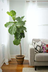 17 Best ideas about Indoor Plant Decor on Pinterest ...