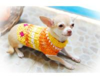 25+ best ideas about Chihuahua clothes on Pinterest   Dog ...