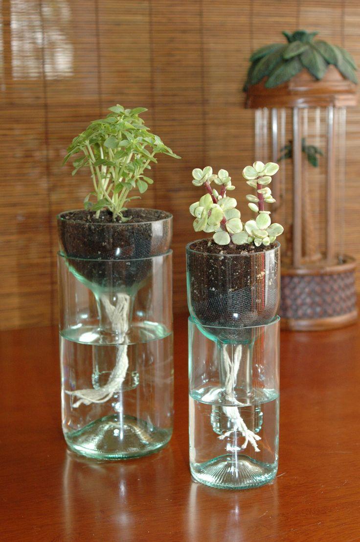25 Best Ideas About Bottle Garden On Pinterest Looking Glass