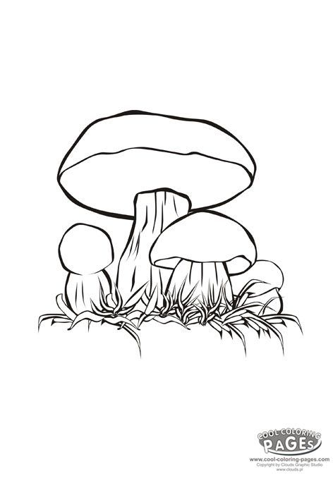 25 Best Ideas About Mushroom Drawing
