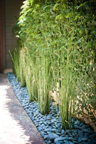 This is what I want instead of that vine near patio With lemon grass to deter bugs  Pull up a
