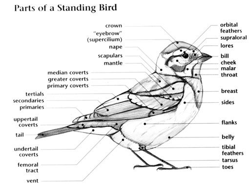 17 Best images about BIRDS ALL KINDS on Pinterest