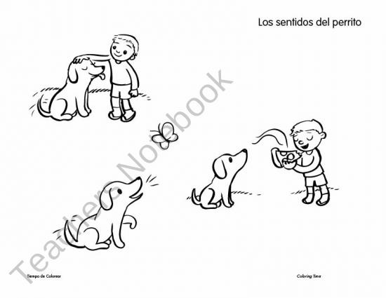 110 best images about los cinco sentidos on Pinterest