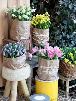 Les 25 Meilleures Idées De La Catégorie Blumenzwiebeln Pflanzen