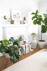 25+ best ideas about Living room plants on Pinterest ...