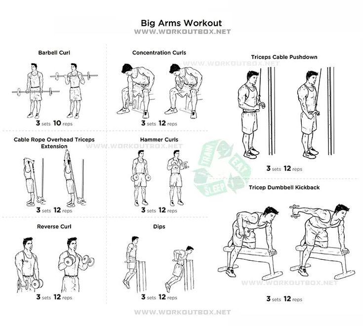 Best 25+ Big arm workout ideas on Pinterest