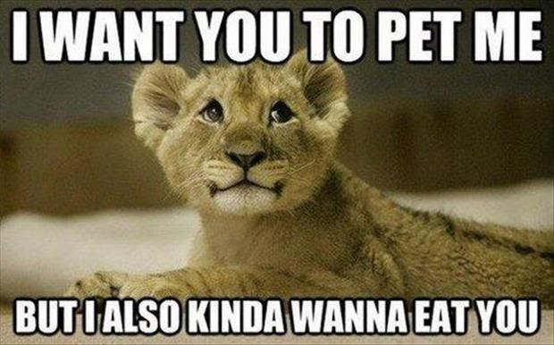 30 Funny animal captions – part 14