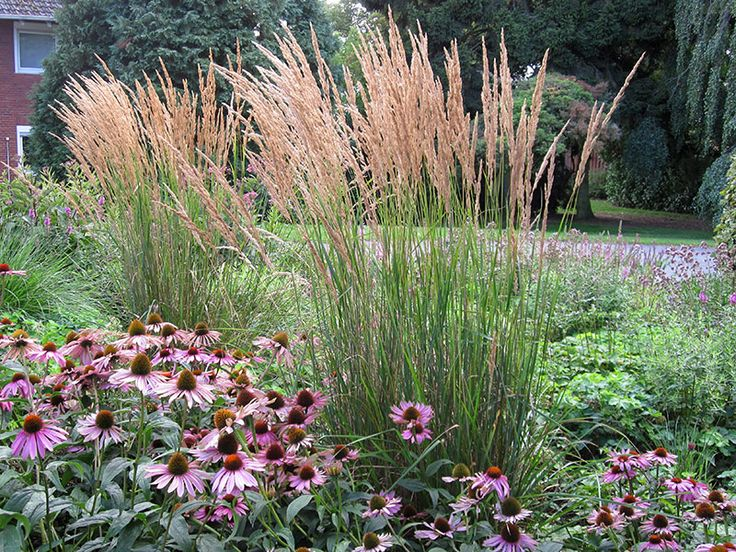 185 Best Images About Garten On Pinterest Feathers Ornamental