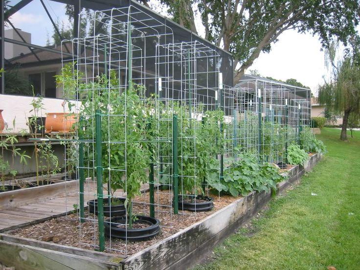100 Ideas To Try About Gardening Tomato & Veggies Aspirin
