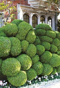 334 best images about Garden Topiary on Pinterest ...