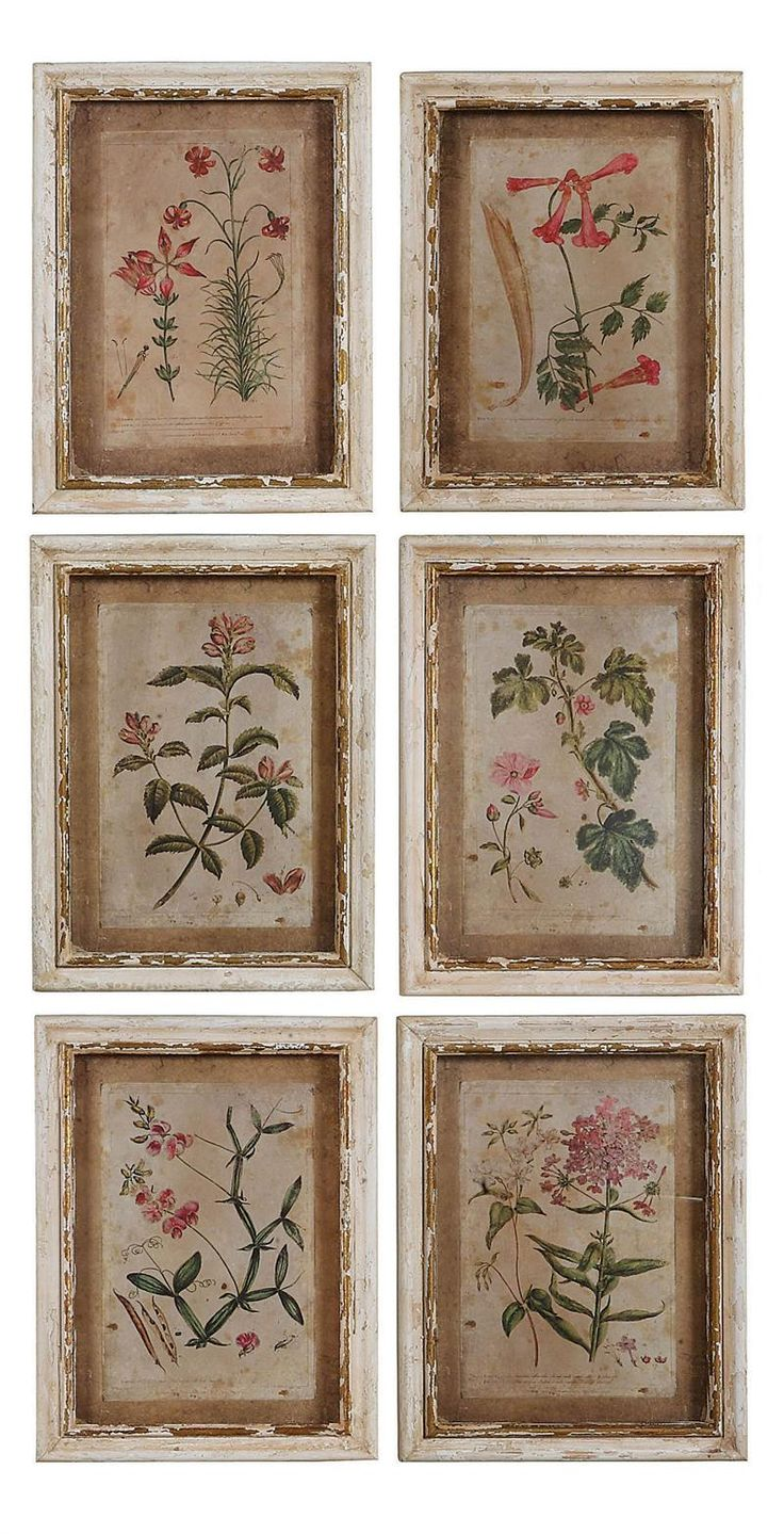 Colonial Williamsburg Botanical Print Collection Price