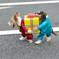 1000+ ideas about Cute Dog Costumes on Pinterest | Puppy ...