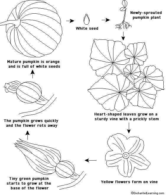 32 best images about Cycle des plantes on Pinterest