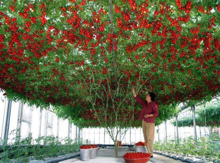 51 Best Images About Vertical Gardening On Pinterest Gardens