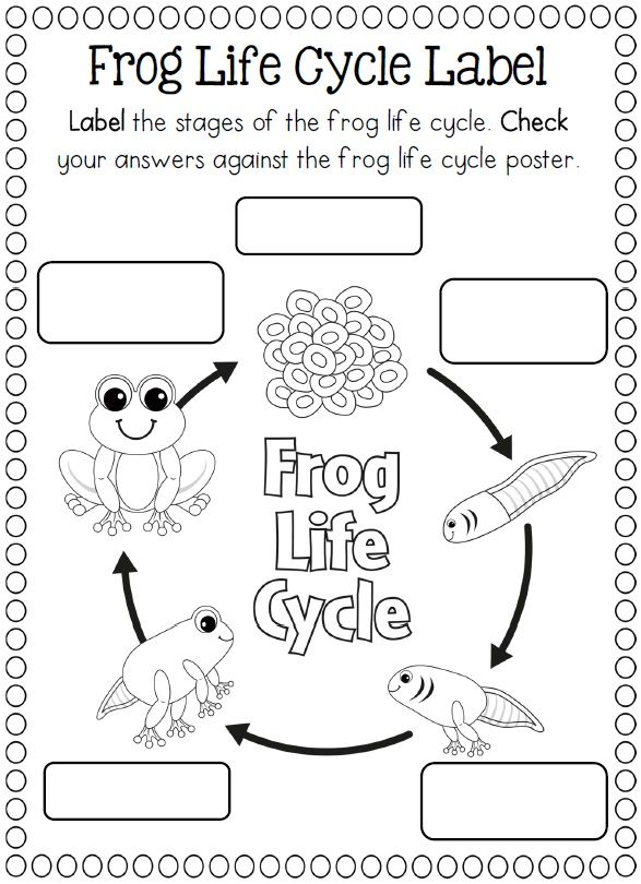 223 best images about 3rd Grade Science on Pinterest