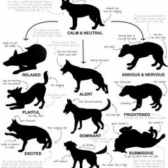 Diagram For 5 Gum 1996 Jeep Grand Cherokee Trailer Wiring Dog Body Language Chart | Pitbull Perfection Pinterest Pets, Gift Cards And Happy