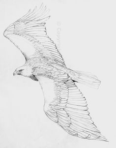 125 best images about bird drawings on Pinterest