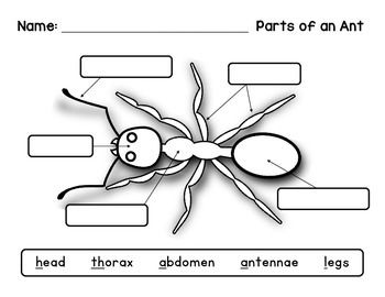Label an Insect: Ant Diagram