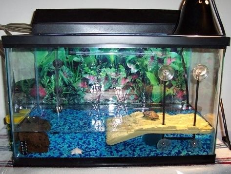 25 best ideas about Red eared slider tank on Pinterest