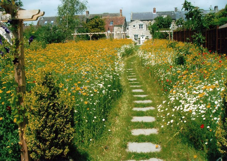 25 Best Ideas About Meadow Garden On Pinterest Wild Flower