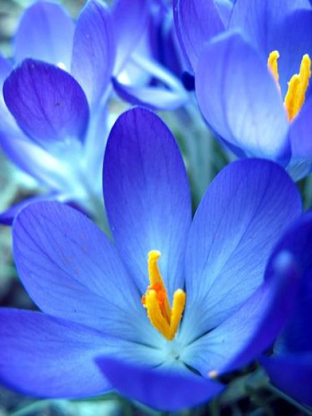 blue flower: