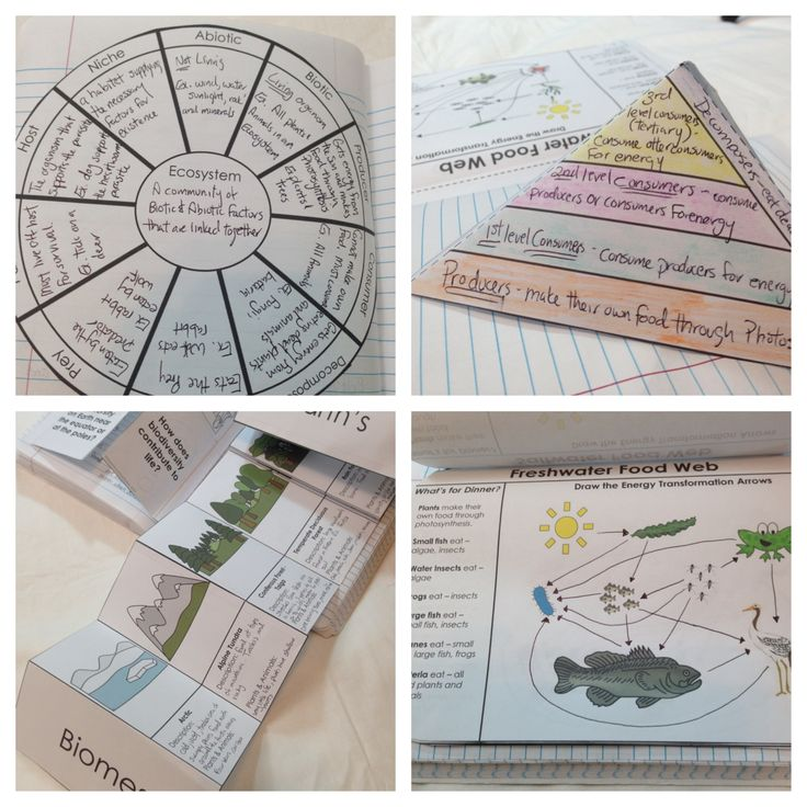 Ecosystems Interactive Notebook Pages Circles Videos