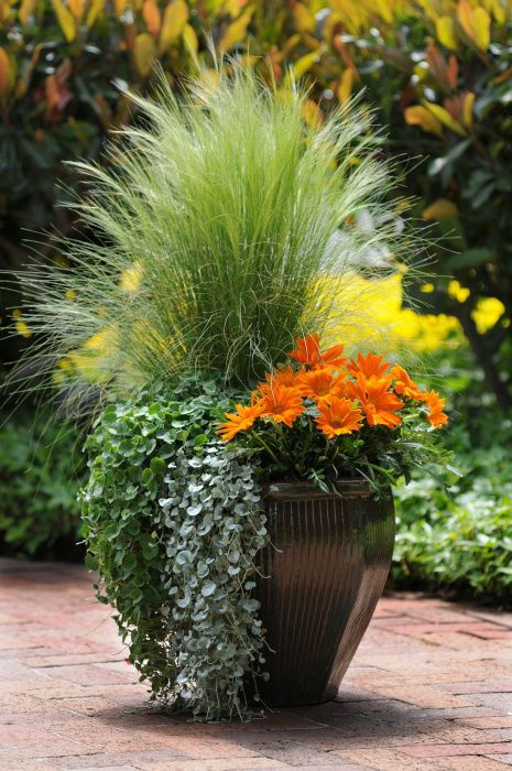 17 Best Images About Container Gardens On Pinterest Fall