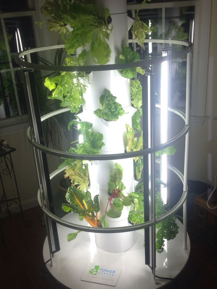 Indoor year round growing herbs lettuces kale spinach celery watercress Bountiful