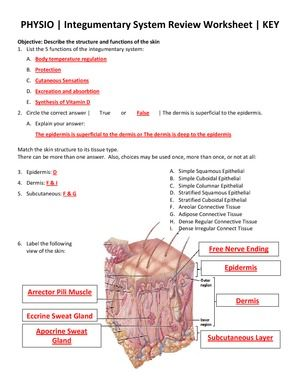 37 Best Images About Integumentary System On Pinterest
