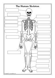 the human skeleton diagram fill in blanks electric antenna wiring labelling sheets | cc cycle 3 week 2 pinterest skeleton, skeletons and ...