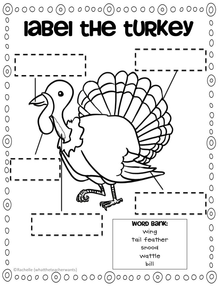 What the Teacher Wants!: TURKEY downloads and something
