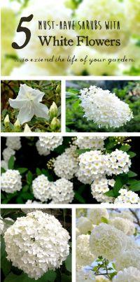25+ best ideas about Garden borders on Pinterest | Flower ...