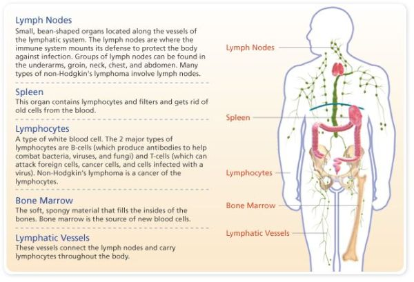 hodgkin lymphoma symptoms Google Search Step 2